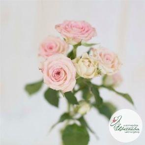 Цветок кустовой розы