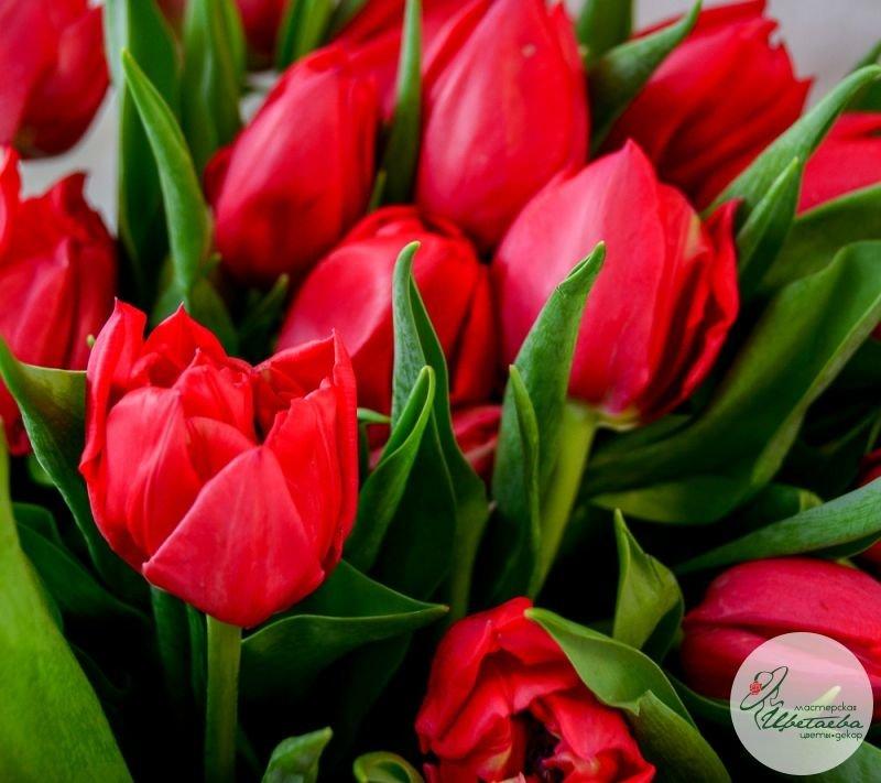 Букет из любого количества тюльпанов красные