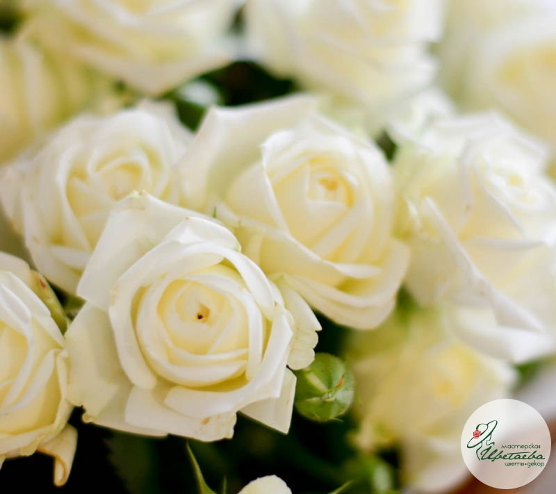 девять кустовых роз макро