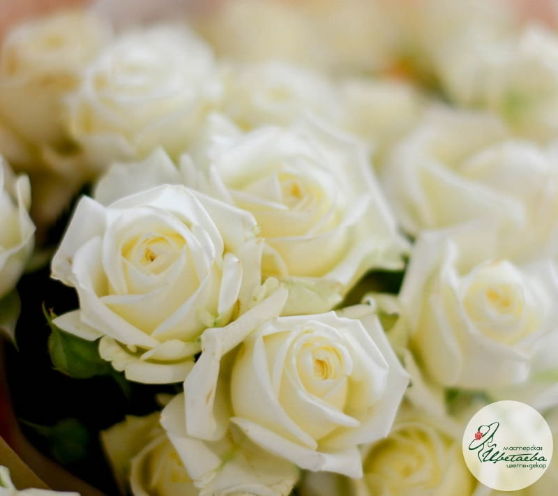 Букет из 11 белых кустовых роз