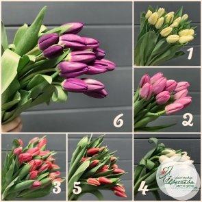 Букет из 25 крупных высоких тюльпанов СОЧИ (цвет на выбор)