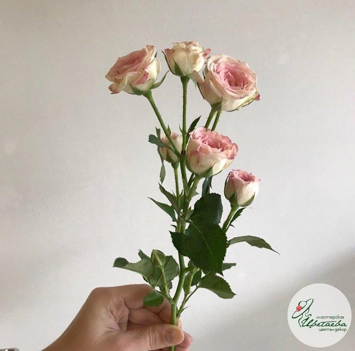 Розы кустовые 40 см