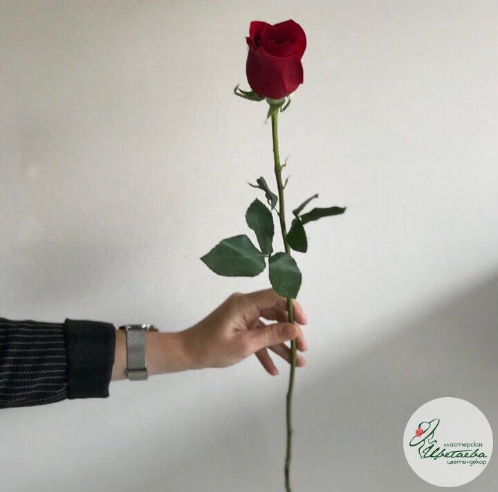 Красная роза 50 см