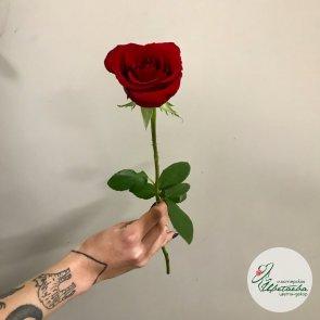 Кенийская роза 40 см