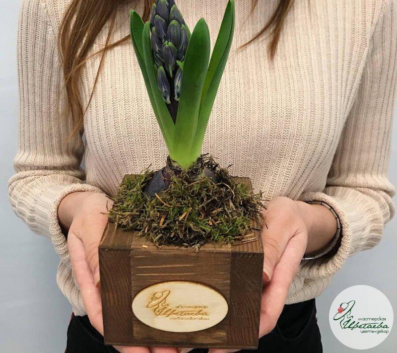 Цветок в горшке к 8 марта